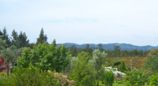 Beautiful views of gardens, pine forests and rolling green hills to distant mountains.